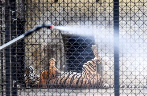 ضدعفونی باغ وحش شهر کلکته هند +عکس
