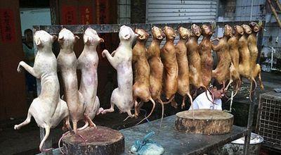 پایان سگ خوری در چین؟ +عکس