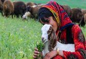 عشایر کوچ نشین همدان به روایت تصویر