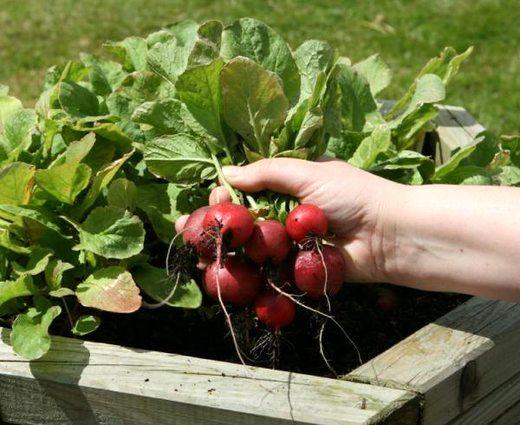 این سبزیجات فشار خون شما را کاهش میدهد