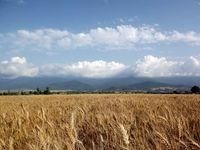 تولیدات بخش کشاورزی با اکوسیستمی جدید روبهرو خواهد بود