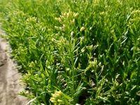 خودکفایی ۸۰درصدی در تولیدات کشاورزی