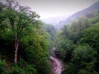 جنگلهای هیرکانی قربانی یک سد