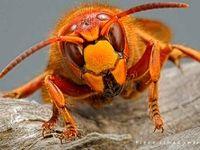عجیب ترین حشرات جهان +تصاویر