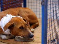 حیوان آزاری همچنان بدون مجازات
