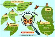 پروانهها در تهران چه میکنند؟ +اینفوگرافیک