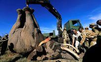 سرویس حمل و نقل مخصوص فیل در کنیا +تصاویر