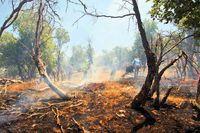 کاهش 71هکتاری آتشسوزی جنگلها