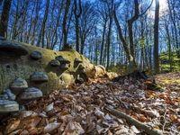 حوادث جوی عامل نابودی جنگلهای آلمان