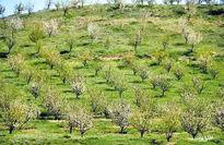 تولید سالانه ۲۰ رقم زراعی و باغی جدید در کشور