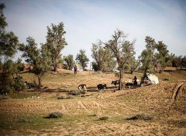پناه بردن سیل زدگان به جنگل