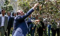 میوه چیدن وزیر امور خارجه ترکیه در اصفهان +عکس