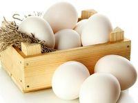 تخم مرغ در 10ماه گذشته چقدر گران شده است؟