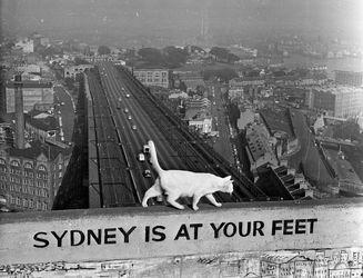 روز جهانی گربهها