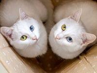 گربههای دوقلو به روایت تصویر