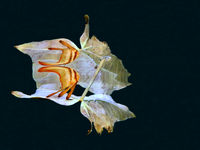برندگان مسابقه عکاسی زیر آب ۲۰۱۹ +تصاویر