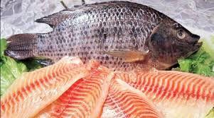 فعلاً خبری از ممنوعیت واردات ماهی تیلاپیا نیست