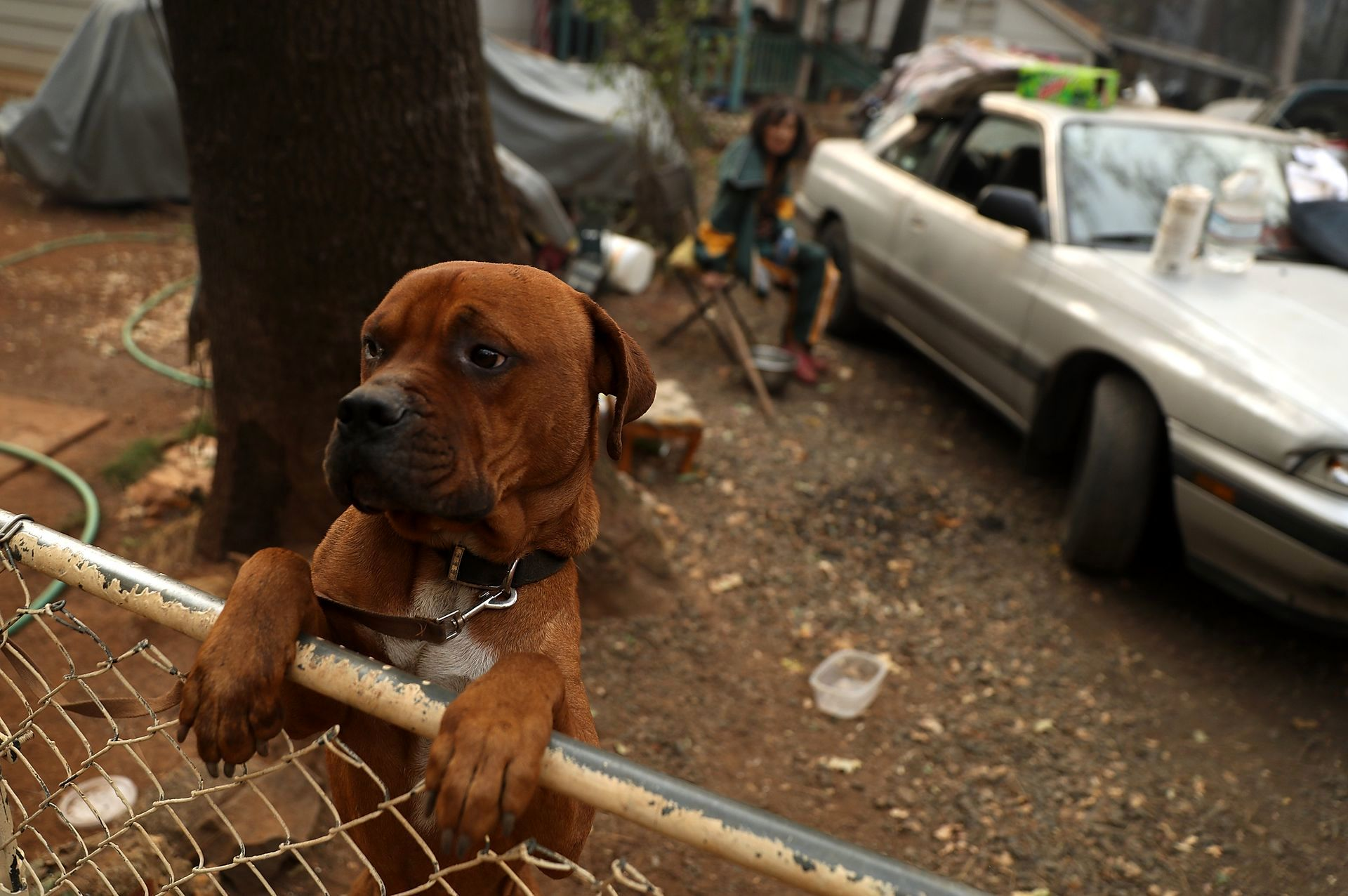 نجات حیوانات از آتش کالیفرنیا