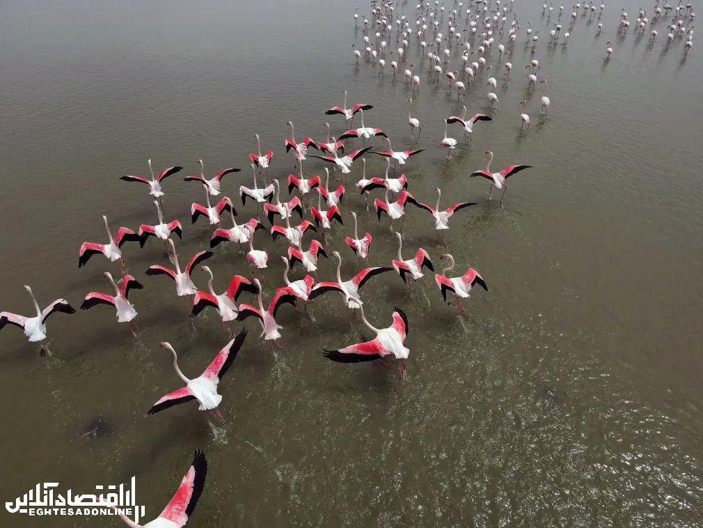 برترین تصاویر خبری ۲۴ ساعت گذشته/ 1 اردیبهشت
