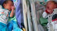 حمله مورچهها به نوزادان دوقلو صحت ندارد
