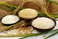 علت دپوی ۲۰۰ هزار تن برنج در گمرکات