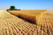 ۳میلیون تن گندم تا اواخر خرداد وارد میشود