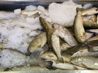 چه ماهیهایی از گوشت مرغ ارزانتر هستند؟