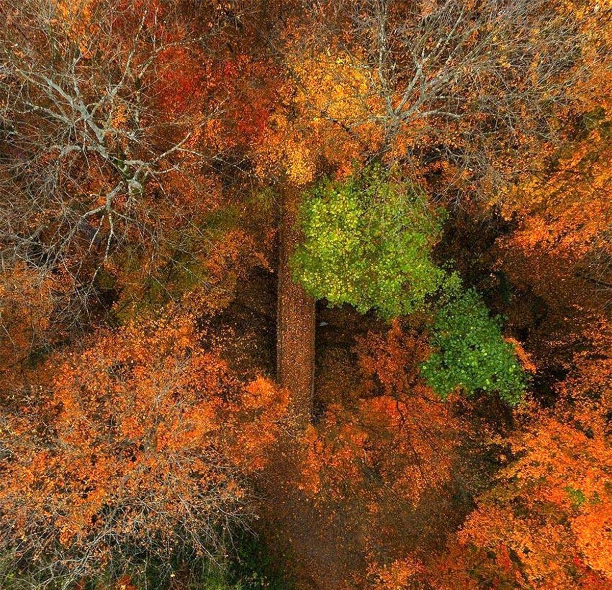 عکسی بینظیر از پاییز گیلان
