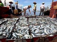 479غیر ایرانی فانوس ماهی صید میکنند
