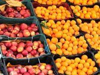 ذخیرهسازی 7000تن پرتقال و سیب شب عید استان تهران