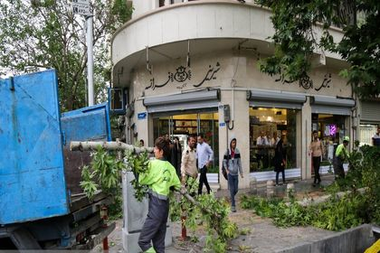 شکسته شدن درختان در پی طوفان تهران +عکس