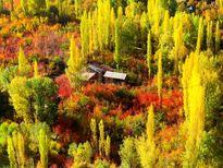 توصیههای طب سنتی در پاییز