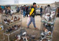 تعطیلی مراکز فروش خودرو و پرنده برای حفظ سلامت شهروندان