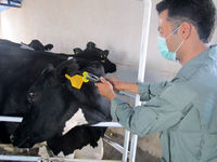 تجمیع پلاککوبیها برای کاهش هزینه دامداران