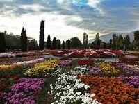 مبارزه با افسردگی به کمک گل و گیاه