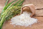 کشت برنج جز در شمال ممنوع