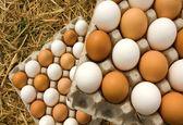 ۲۵.۷ درصد؛ افزایش سالانه قیمت تخم مرغ