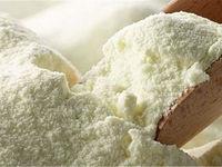 دولت حداقل تا پایان تابستان صادرات شیر خشک را آزاد کند