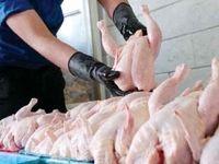 کاهش قیمت مرغ در راه است