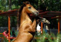 گران قیمتترین اسبهای دنیا در ایران +تصاویر