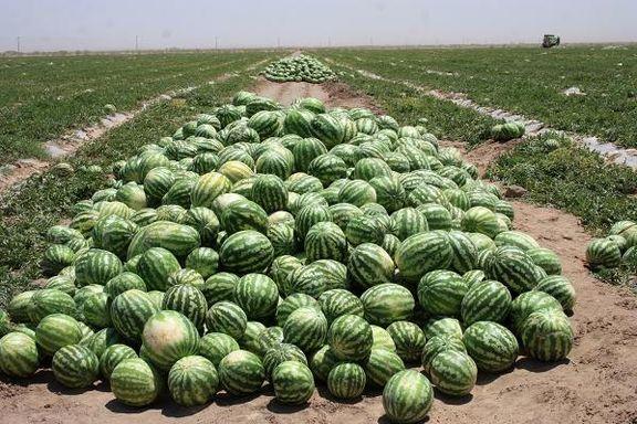 تغییر الگوی کشت ضرورت کشاورزی استان سیستان و بلوچستان/ صنعت را جایگزین کشاورزی کنید