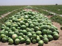 چرا هندوانههای صادراتی به ترکیه برگشت خورد؟