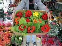 بازار گل خالی از دلال/ هزینه گلآرایی؛ ۳۰درصد قیمت فاکتورفروش