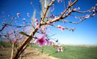بهار در «گلستان» +تصاویر