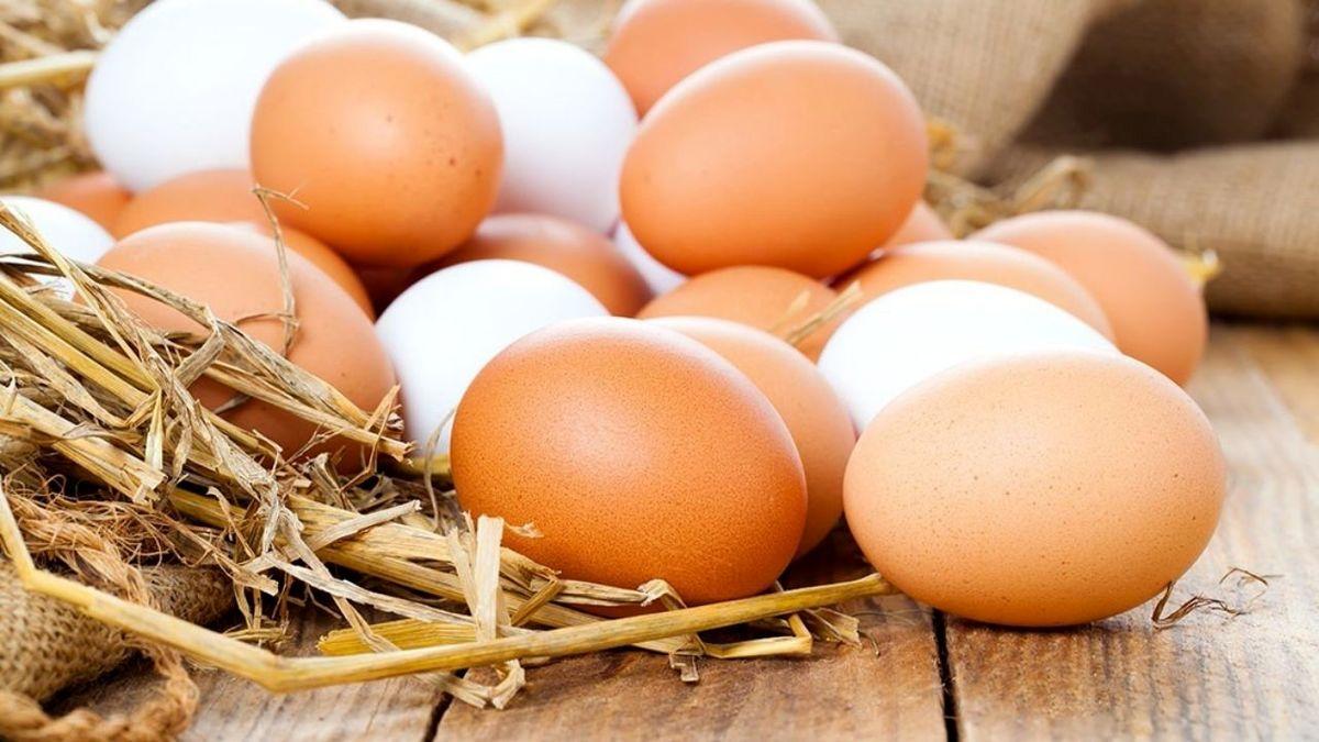 قیمت شانه و کارتن از تخم مرغ گران تر است