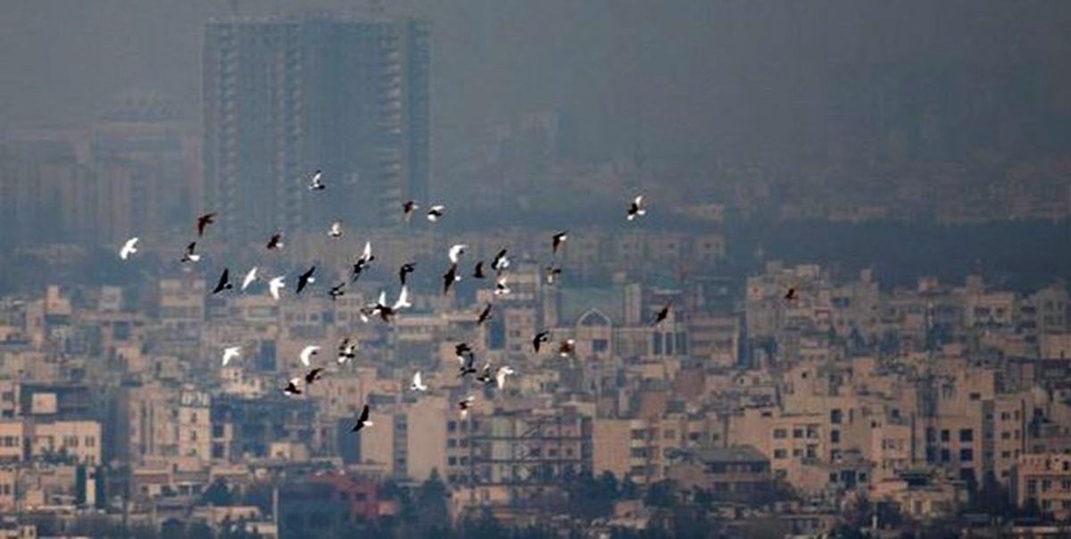 ادامه غلظت آلایندگی در کلانشهرها
