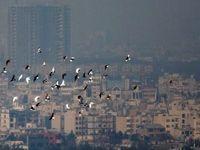 پایتخت در محاصره دود
