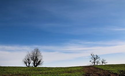 جنگل دالخــانی کجاست؟ +عکس