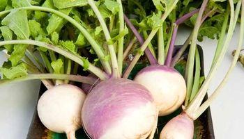 شلغم؛ بهترین خوراکی در فصل سرما
