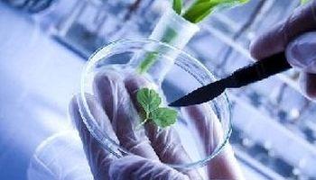 اثر داروی بیهوشی بر روی گیاهان!